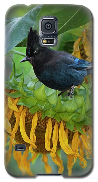Giant Sunflower With Jay Galaxy S5 Case