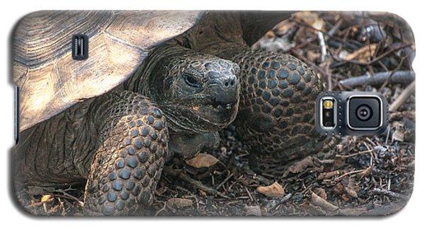 Giant Tortoise At Urbina Bay On Isabela Island  Galapagos Islands Galaxy S5 Case