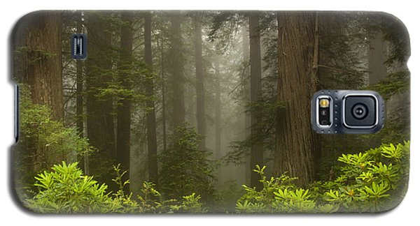 Giants In The Mist Galaxy S5 Case