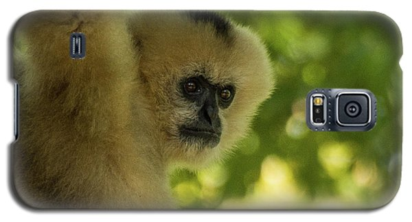 Gibbon Portrait Galaxy S5 Case