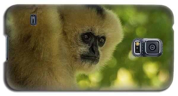 Gibbon Portrait Galaxy S5 Case