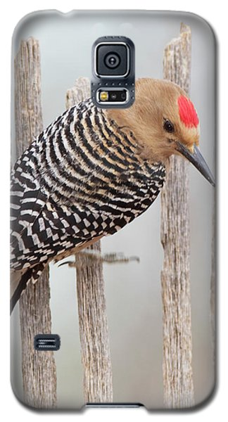 Gila Woodpecker Galaxy S5 Case