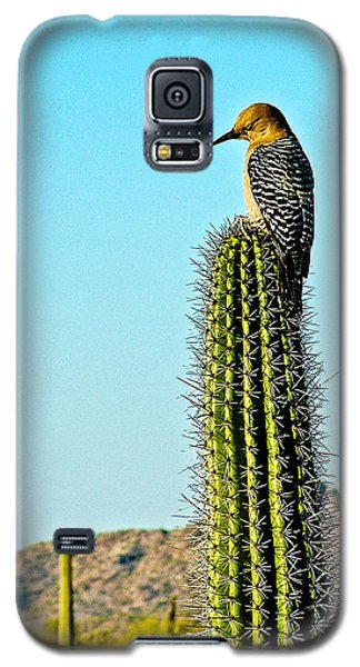 Gila Woodpecker On Saguaro In Organ Pipe Cactus National Monument-arizona Galaxy S5 Case by Ruth Hager