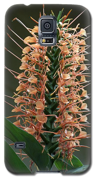 Galaxy S5 Case featuring the photograph Ginger Blossom by Farol Tomson