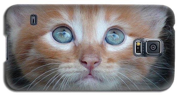 Ginger Kitten With Blue Eyes Galaxy S5 Case by Sergey Lukashin