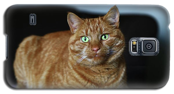 Galaxy S5 Case featuring the photograph Ginger Marmalade Cat by Nareeta Martin