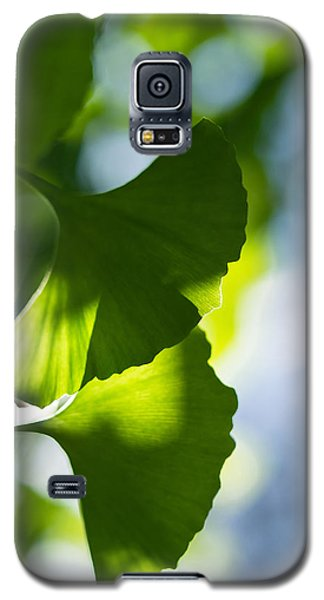 Gingko Leaves In The Sun Galaxy S5 Case