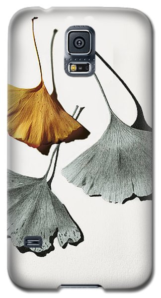 Ginkgo Leaves Galaxy S5 Case