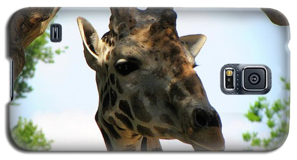 Galaxy S5 Case featuring the photograph Giraffe by Beth Vincent