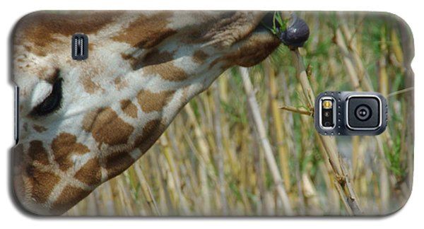 Galaxy S5 Case featuring the photograph Giraffe Feeding 1 by Robyn Stacey