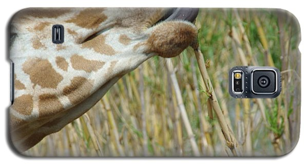 Galaxy S5 Case featuring the photograph Giraffe Feeding 2 by Robyn Stacey