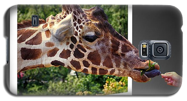 Giraffe Feeding Out Of Frame Galaxy S5 Case