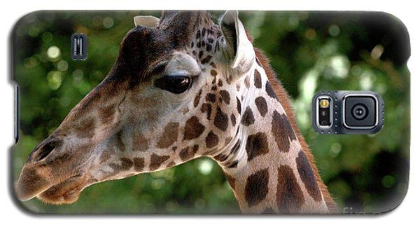 Giraffe Portrait Galaxy S5 Case