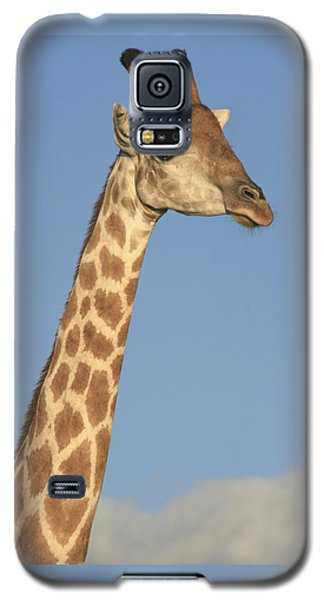 Giraffe Portrait Galaxy S5 Case