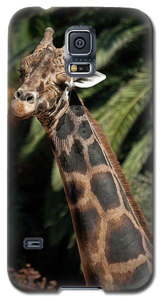 Galaxy S5 Case featuring the photograph Giraffe Study 2 by Roger Mullenhour