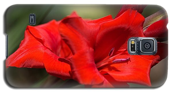 Gladioli Manhattan Variety  Galaxy S5 Case