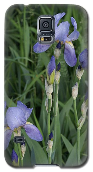 Galaxy S5 Case featuring the photograph Glads by Cynthia Powell
