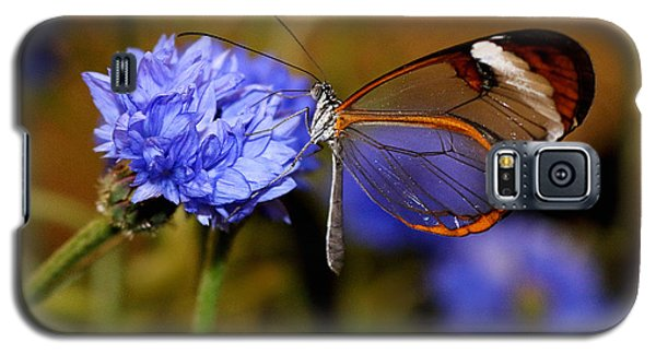 Glasswing Butterfly Galaxy S5 Case by Living Color Photography Lorraine Lynch