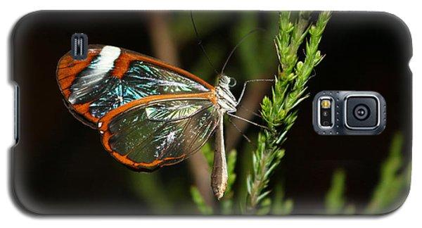Glasswinged Butterfly Galaxy S5 Case