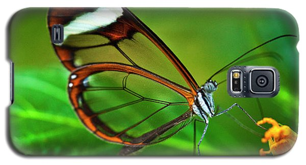 Galaxy S5 Case featuring the photograph Glasswinged Butterfly by Ralph A Ledergerber