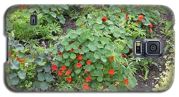 Glenveagh Castle Gardens 4278 Galaxy S5 Case