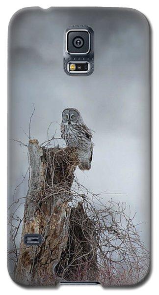 Gloomy Sunday  Galaxy S5 Case by Heather King