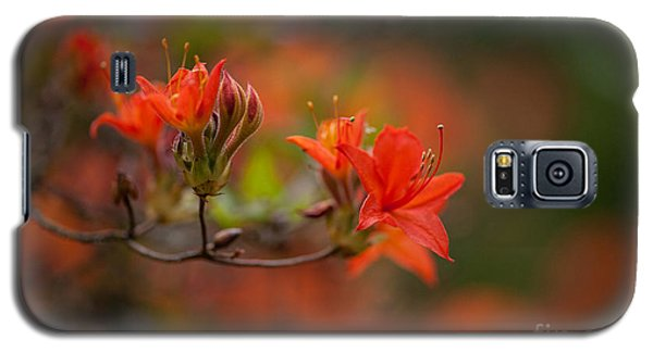 Glorious Blooms Galaxy S5 Case