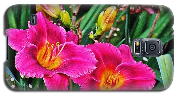 Glorious Daylilies Galaxy S5 Case