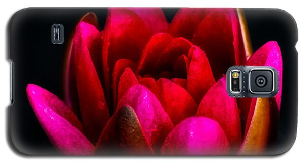 Lily Galaxy S5 Case - Glorious Lily by Adrian Evans