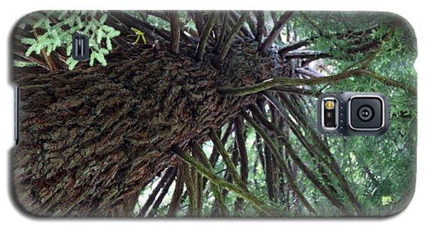 Glorious Tree  Galaxy S5 Case