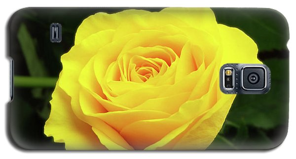 Glorious Yellow Rose Galaxy S5 Case
