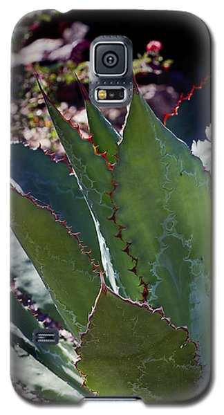 Galaxy S5 Case featuring the photograph Glowing Agave by Phyllis Denton