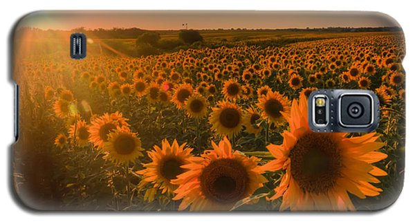 Glowing Sunflowers Galaxy S5 Case