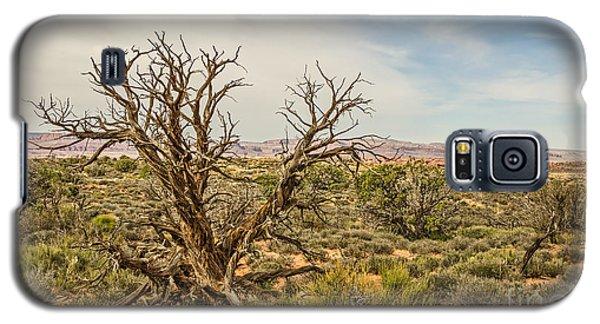 Gnarled Juniper Tree In Arches Galaxy S5 Case