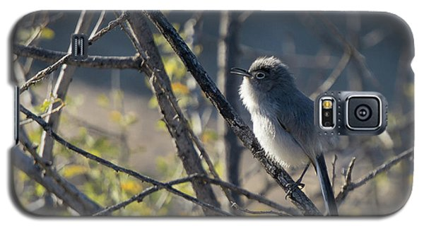 Gnatcatcher Galaxy S5 Case