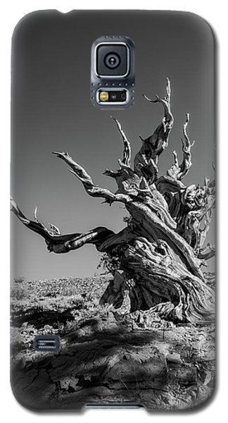 Galaxy S5 Case featuring the photograph Gnome Tree by Alexander Kunz