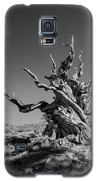 Gnome Tree Galaxy S5 Case by Alexander Kunz