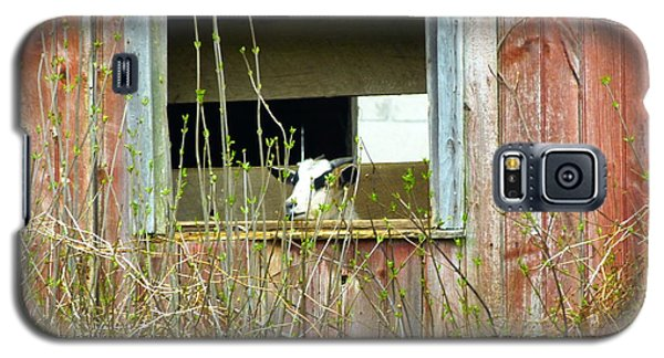 Galaxy S5 Case featuring the photograph Goat In The Window by Donald C Morgan