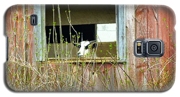 Goat In The Window Galaxy S5 Case by Donald C Morgan