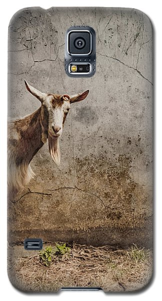 London, England - Goat Galaxy S5 Case