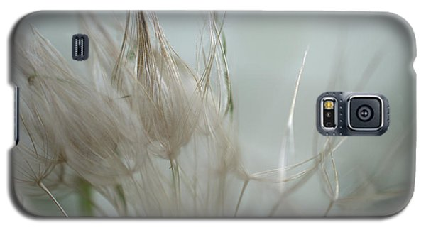 Goatsbeard Seedhead Galaxy S5 Case by Aliceann Carlton
