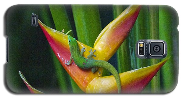 Gold Dust Day Gecko Galaxy S5 Case by Sean Griffin