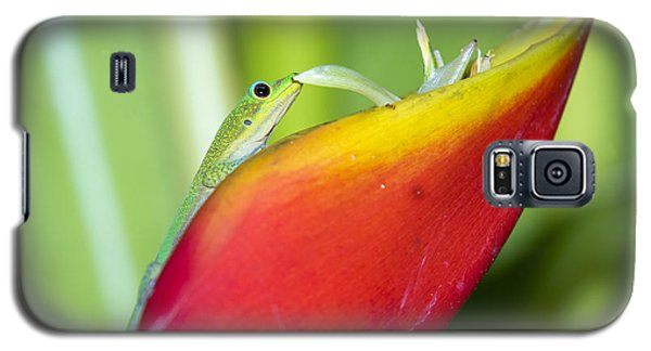 Gold Dust Day Gecko Galaxy S5 Case
