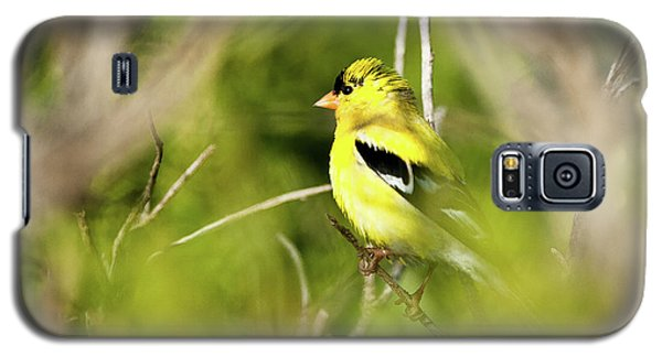 Gold Finch Galaxy S5 Case by Greg Nyquist