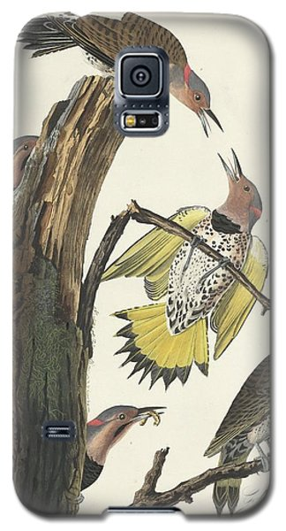 Gold-winged Woodpecker Galaxy S5 Case
