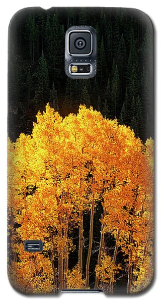 Galaxy S5 Case featuring the photograph Golden Autumn by Andrew Soundarajan