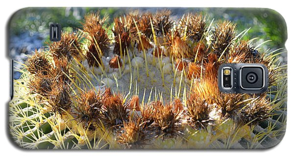Galaxy S5 Case featuring the photograph Golden Barrel Cactus by Glenn McCarthy Art and Photography