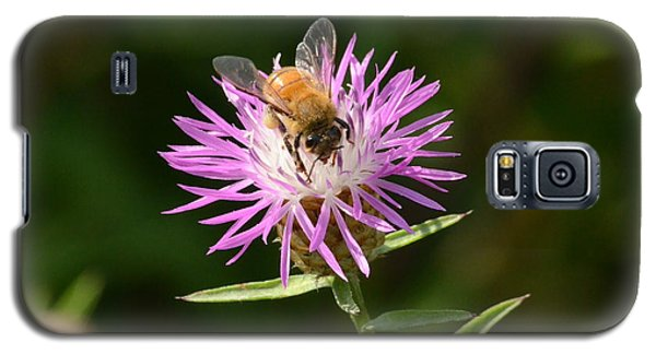 Golden Boy-bee At Work Galaxy S5 Case