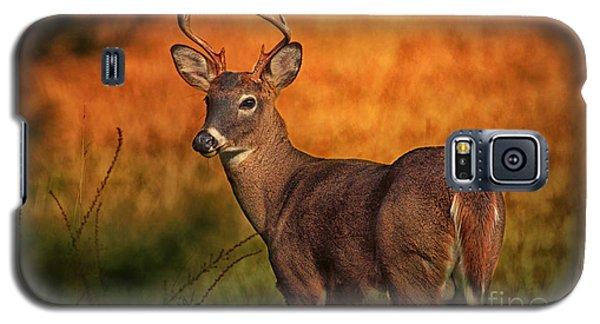 Golden Buck Galaxy S5 Case