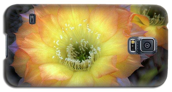 Golden Cactus Bloom Galaxy S5 Case by Saija  Lehtonen
